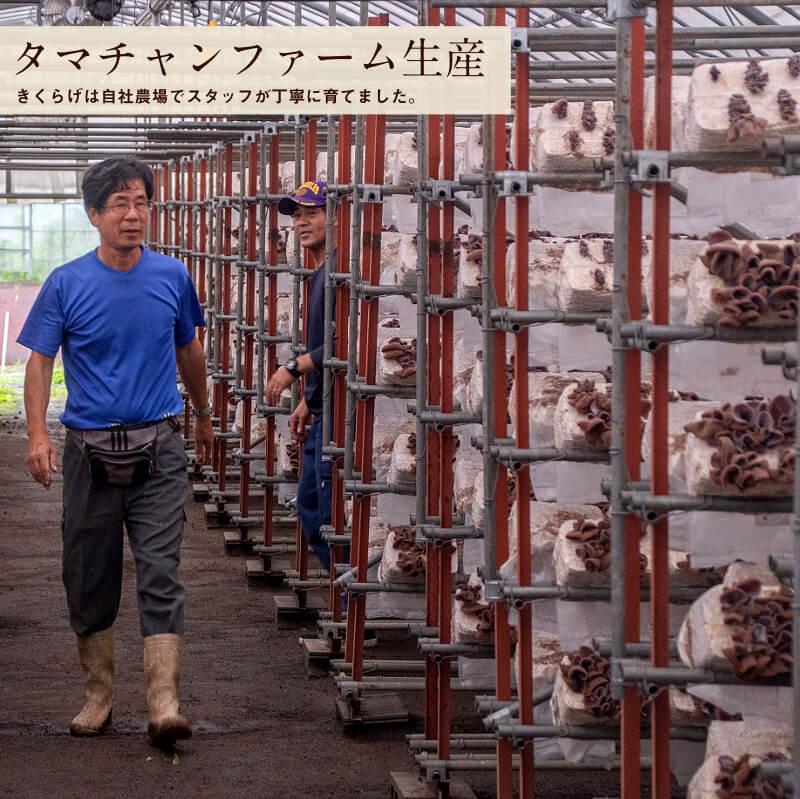 九州産乾燥キクラゲサムネイル12