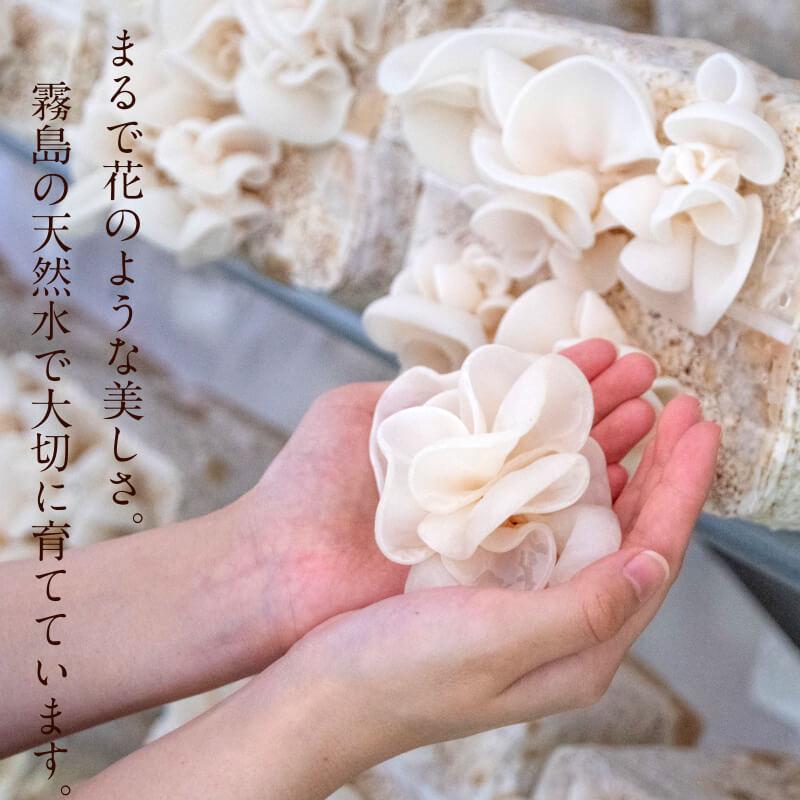 九州産乾燥キクラゲサムネイル14