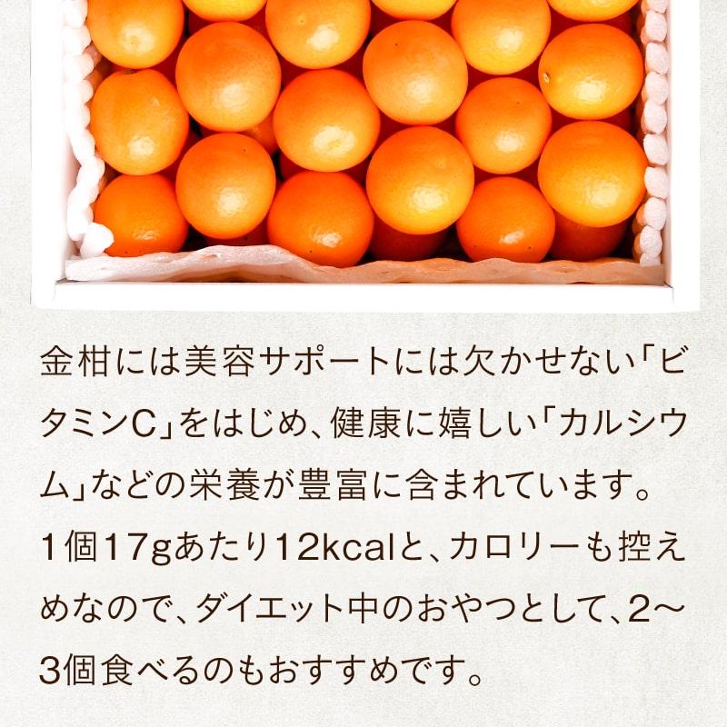宮崎金柑たまたま2L 500g(簡易パック) | タマチャンショップ 公式 ...