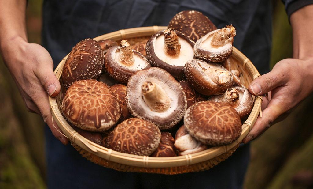 タマチャンショップの原点!  食品屋が惚れ込む「原木椎茸」の世界。