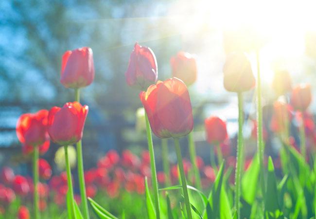 春の花と日差しのイメージ