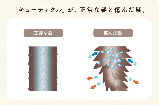 キューティクルが損傷した髪は、過剰な水分が出入りしてうねりの原因に。